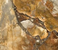 8330-Petrified-Wood